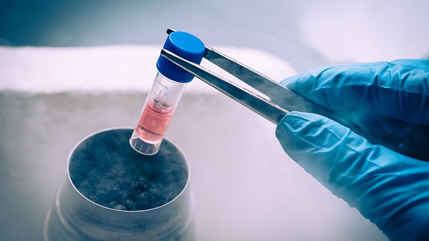 Skin Cells become Stem Cells